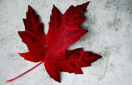 CanadaVampireSeries